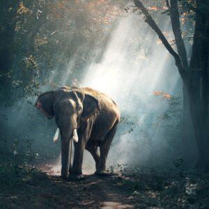 musica-instrumental-view-of-elephant